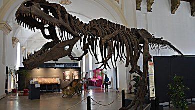 Photo of Torino, il Museo Regionale di Scienze Naturali è pronto a riaprire dopo otto anni